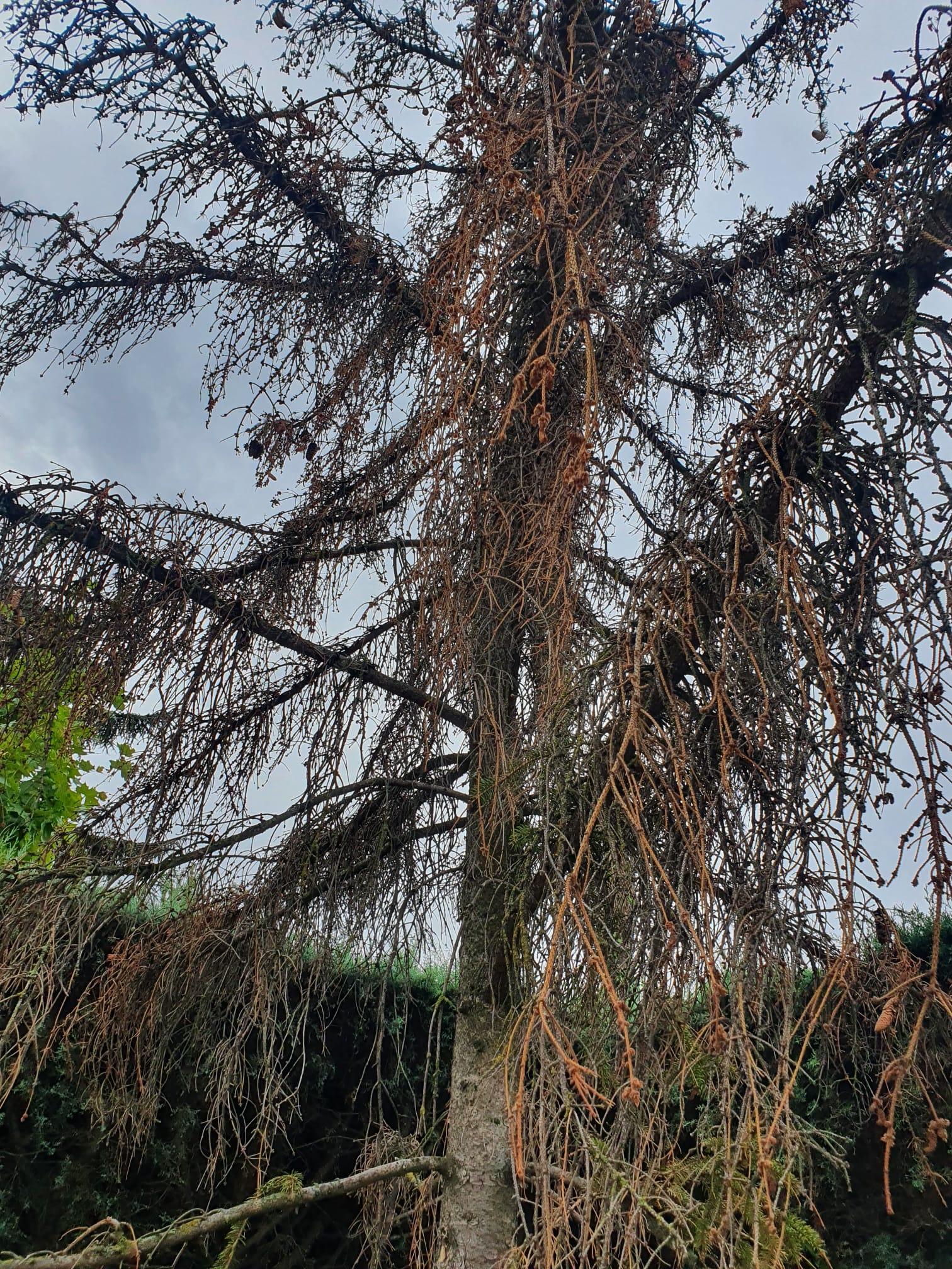 Arbol seco, la importancia de cuidar la vegetacion