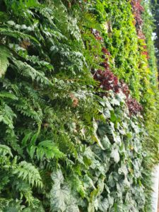 El jardín vertical en el paisajismo, por Cristina Nistal