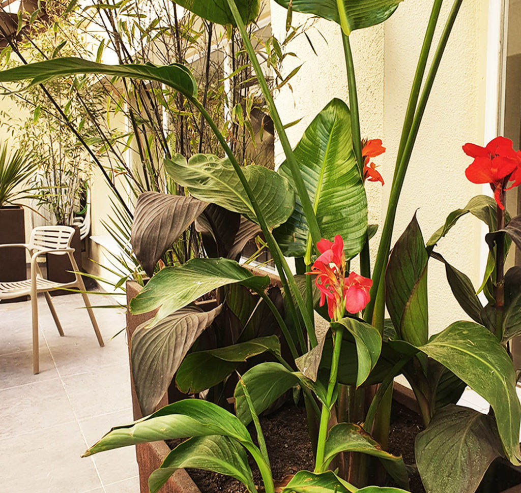 Jardín con aires tropicales en Madrid