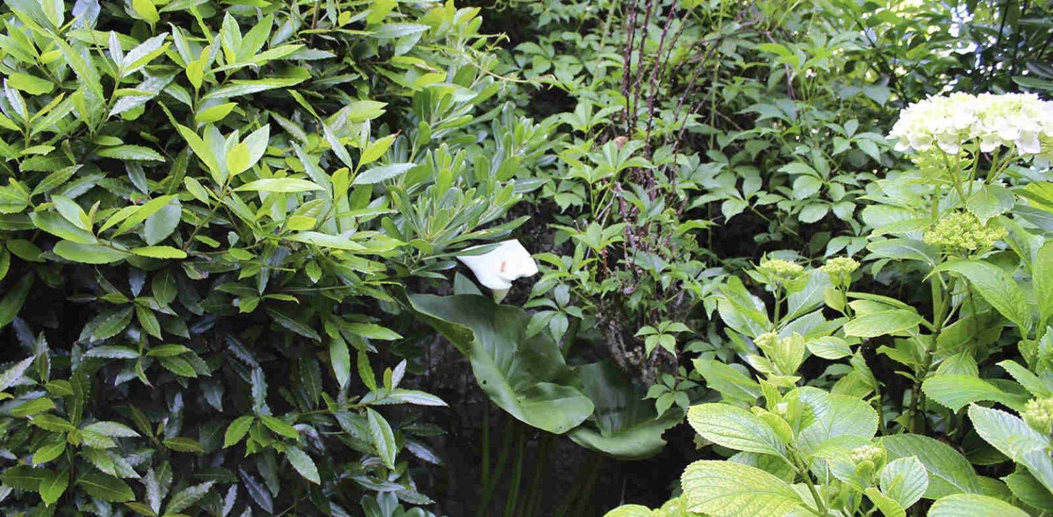 Jardín privado en Santander