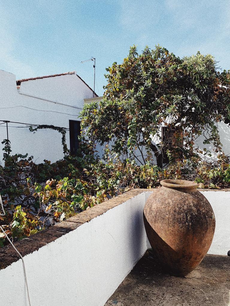 Proyecto de paisajismo en Convento en Extremadura, Paisajismo Cristina Nistal
