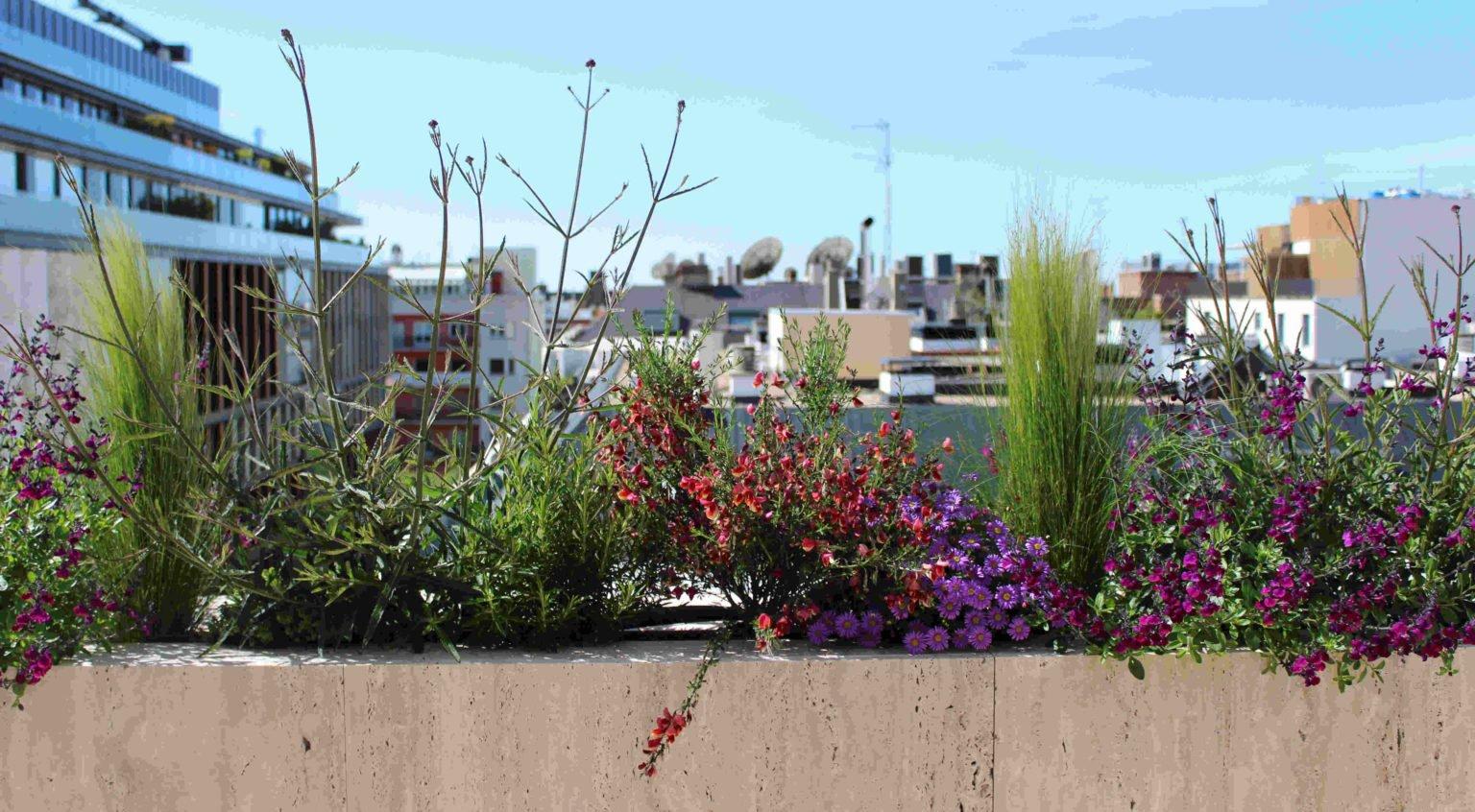 Proyecto de paisajismo en ático en Maldonado, con plantación aromática